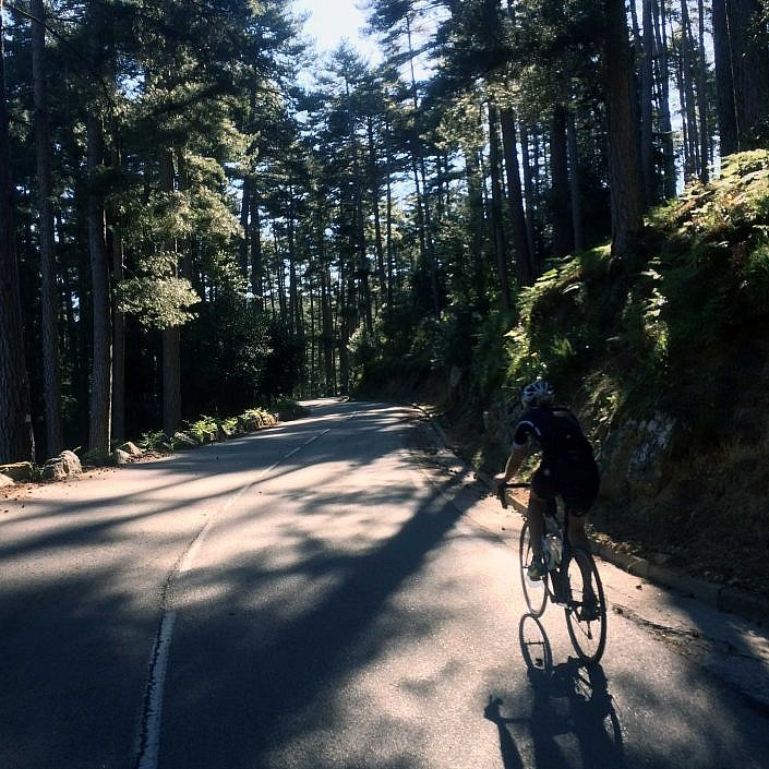 D84 through the forests to Col de Palmarella